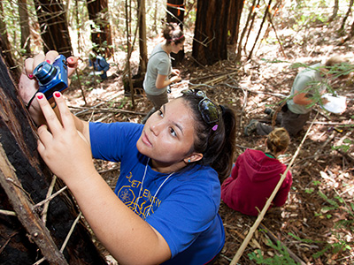 Interns help collect data on Pepperwood's redwoods. Photo by Richard Morgenstein.