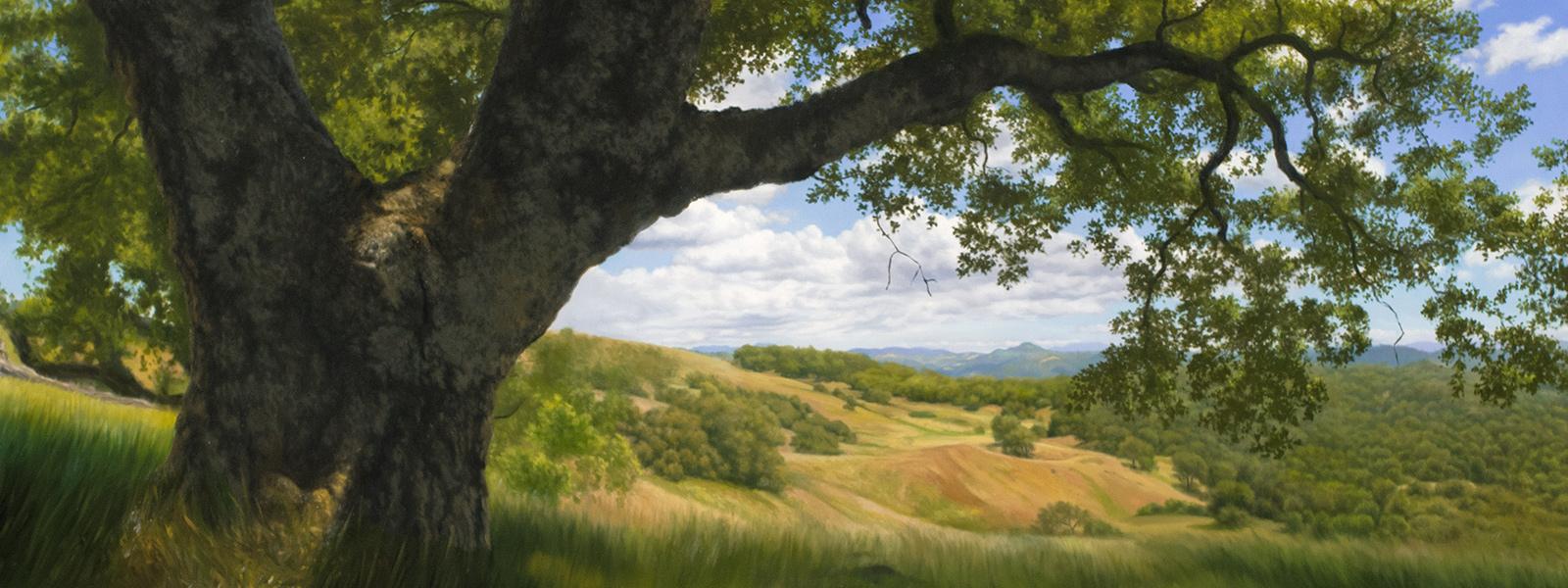 Natural Resources Oak Tree Purpose