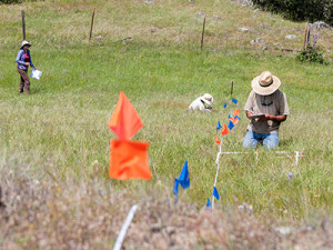 Citizen-Science-Grassland-Monitoring
