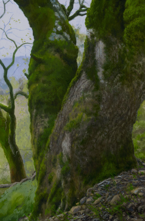 Mossy Oak Trunks, oil on canvas painting by Sonoma County artist Christopher Evans