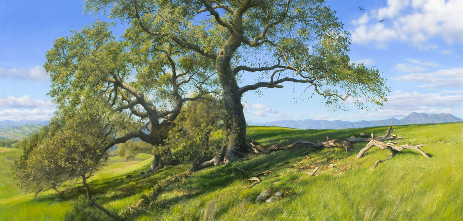 Oaks at Three Tree Hill, oil on canvas painting by Sonoma County artist Christopher Evans